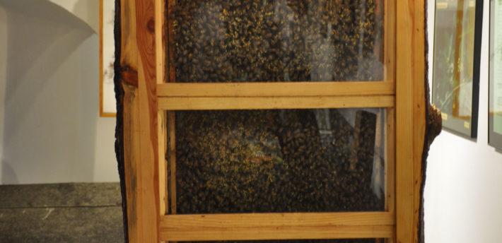 Pszczela rodzina w szklanym ulu